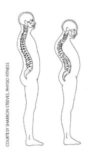 Rounded spine